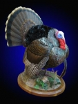 Turkey, Strutting on Finished Wood Habitat Scene