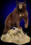 Black Bear, Lifesize Walking, Front Elevated