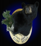 Black Bear Wall Pedestal Mount with side accents and claws on panel
