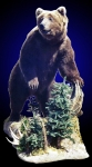 Brown Bear Lifesize Mount, Front Elevated on log with pines.