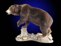 Brown Bear Lifesize Mount, Front Leg on Stump
