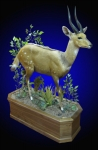 Bushbuck, Lifesize on Finished Walnut Habitat