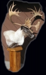 Caribou Pedestal Mount