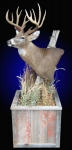 Whitetail Deer, Pedestal mount, on Rustic Barn Board Base
