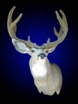 Mule Deer, Semi Sneak with Synthetic Velvet