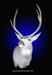 Mule Deer, Standard Shoulder Mount, Semi-Sneak with nose tipped up