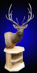 Elk Pedestal Mount on Rustic Table Base