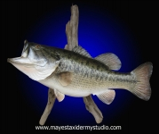 Largemouth Bass Mount