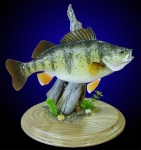 Perch Mount on Tabletop Base