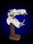 Hippo Skull on Finished Oak Pedestal
