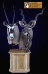 Kudu and Gemsbok pedestal mount