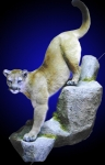 Mountain Lion Lifesize Mount Stepping Down Sharply on Wall Mounted Rock