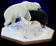 Polar Bear, Lifesize on Multi-Specie Snow and Ice habitat