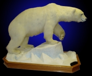Polar Bear, Lifesize on Finished Oak Habitat with &quot;Seal Hole&quot;
