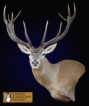 Red Stag Wall Pedestal Mount