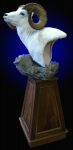 Dall Sheep Pedestal Mount on Finished Walnut Pyramid and Rock Base
