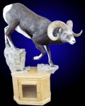 Stone Sheep Lifesize Mount on Oak Cabinet with Rock