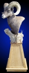 Rocky Mountain Bighorn Sheep Pedestal Mount on Oak Pyramid and Rock Base