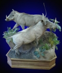 Warthog Double Lifesize Mount on Walnut Base with Waterhole Habitat